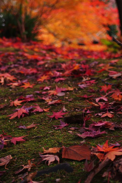 Someday In Autumn