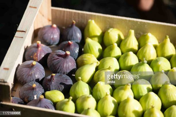 Someone picking green figs and ripe purple figs. Crate of figs.