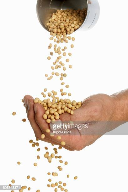Someone pouring soya beans into their hand
