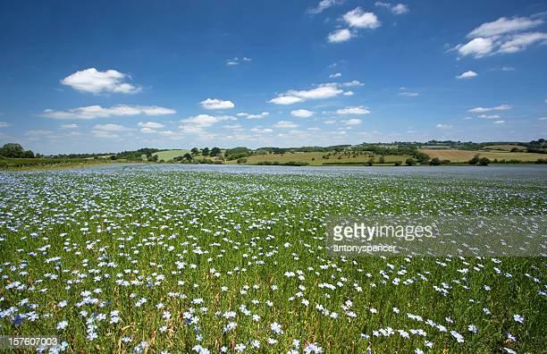 Somerset Flax