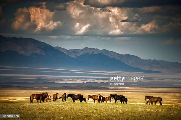 somewhere down in kazakhstan - カザフスタン ストックフォトと画像