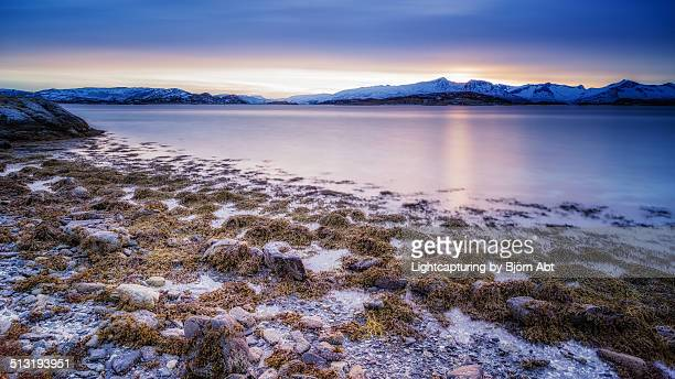 Seaweed Stock Photos And Pictures Getty Images