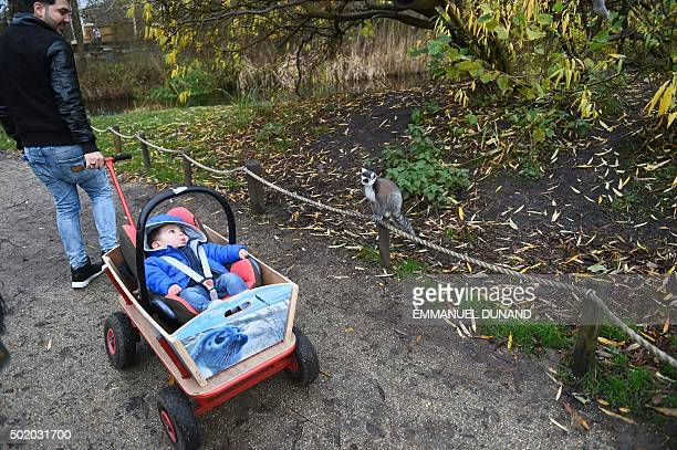Son Adam looks at a lemur as he sits in a cart during a tour with his parents Iraqi refugees Ahmad and Alia which was organized by local voulounteers...