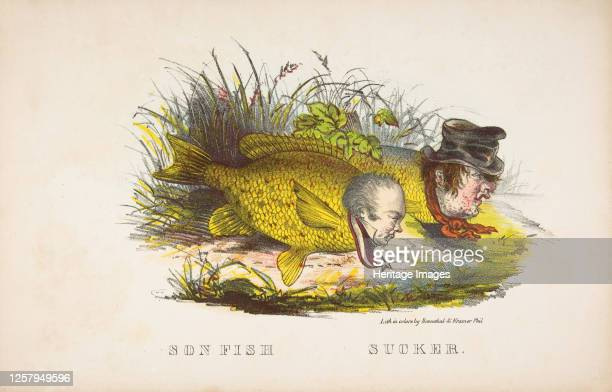 Son Fish and Sucker, from The Comic Natural History of the Human Race, 1851. Artist Henry Louis Stephens, L. Rosenthal.