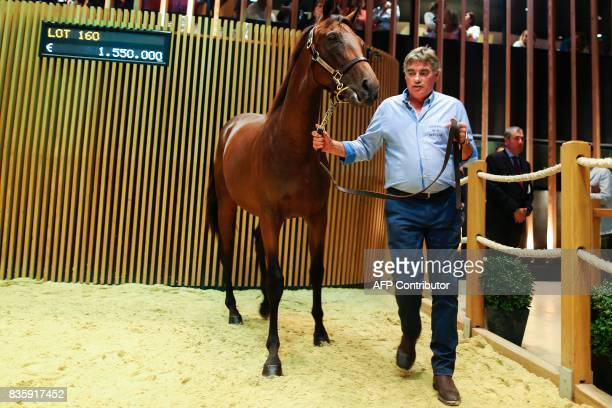Son of Dubawi and Giofra from The 'Haras de la Perelle ' is presented and sold for 1000 euros during the Yearlings sales one of the world renowned...