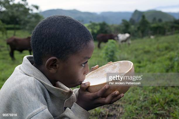 A son of Fulani farmer Wakilu Hamidu Haasam's age drinks milk just milked from the family cows on August 9 2009 in Sabgu village Cameroon Many small...