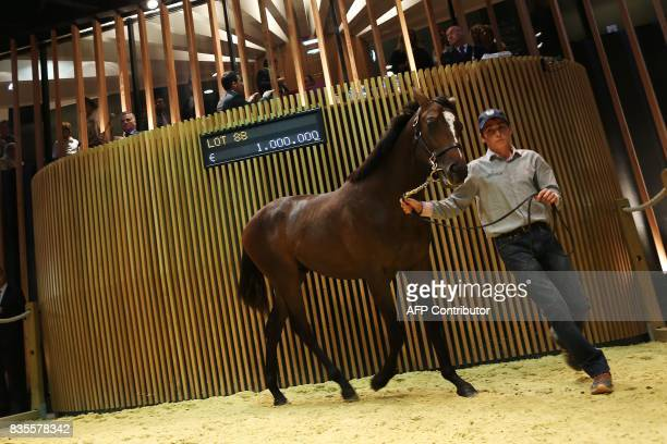 Son of Galileo and Tonnara from The 'Haras des Monceaux ' is presented and sold for 1000 euros during the Yearlings sales one of the world renowned...