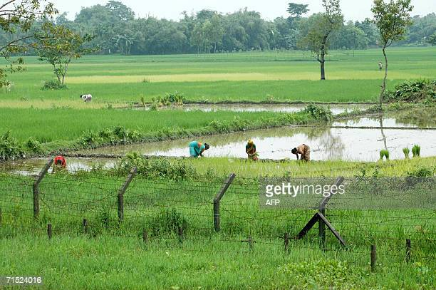 In this picture taken 23 July 2006 Bangladeshi women cultivate crops behind the fence which marks the IndiaBangladesh border near the village of...