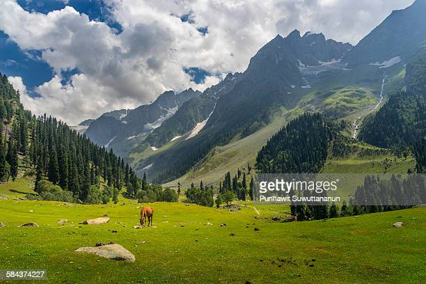 sonamarg landscape with red hourse - srinagar stock pictures, royalty-free photos & images