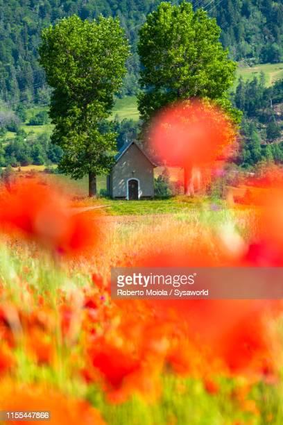 song mang (kirche) chapel and poppies, bonaduz, switzerland - kirche ストックフォトと画像