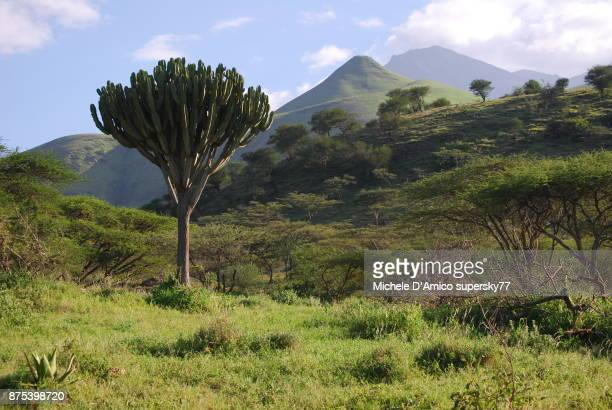 songe and mount meru from the forested savannah in mkuru - meru filme stock-fotos und bilder