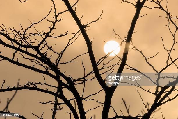 Sonne hinter Baumkrone