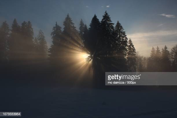 sonne - sonne stock pictures, royalty-free photos & images