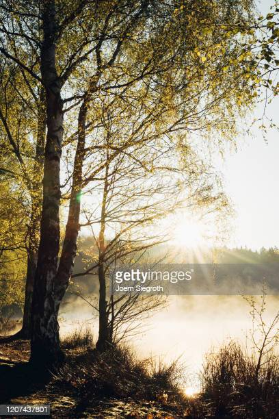 sonnenaufgang am badesee - skinny dipping stock pictures, royalty-free photos & images