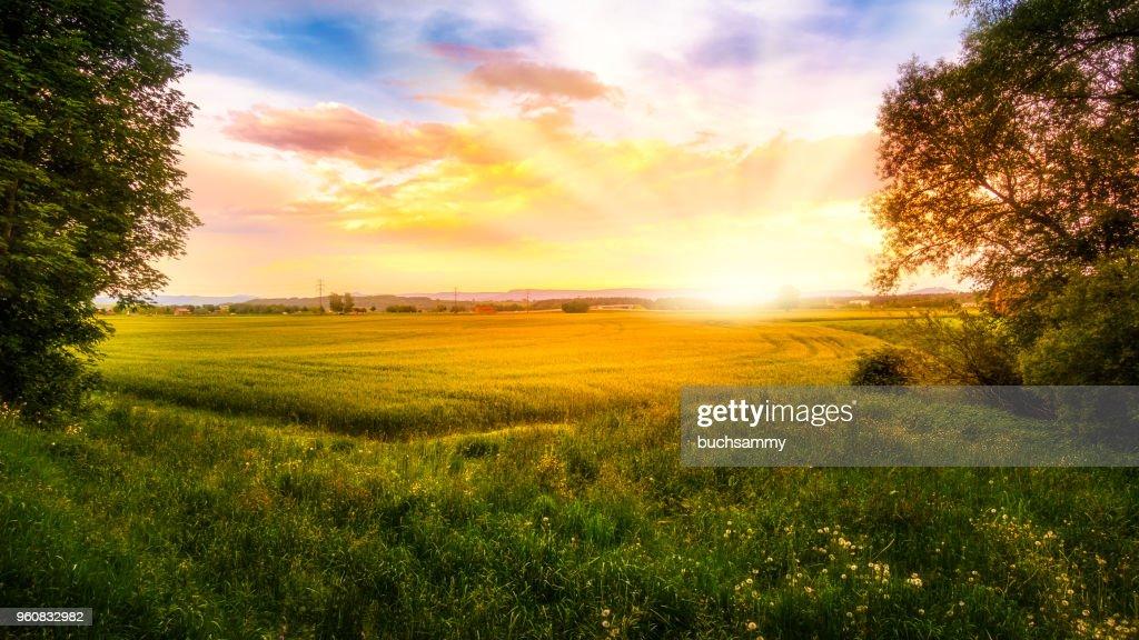 Sonnenaufgang über einem Getreidefeld : Stock-Foto