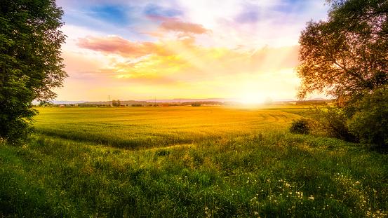 Sonnenaufgang über einem Getreidefeld - gettyimageskorea