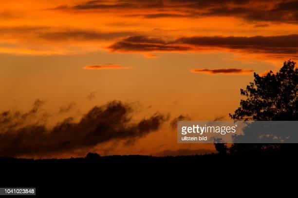 Sonnenuntergang blauer Himmel mit roetlichen Wolken hinter Baum