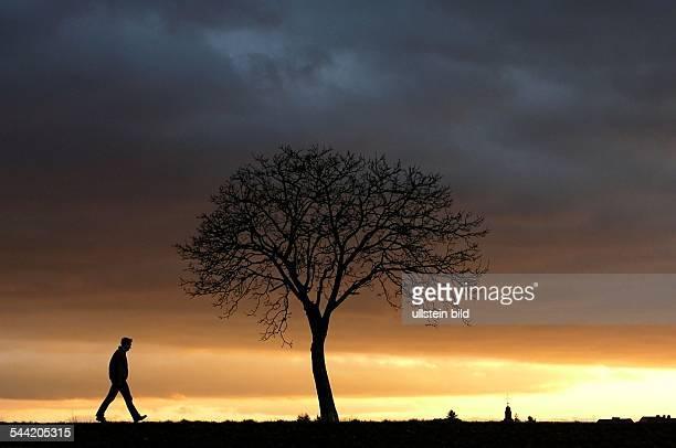 Sonnenuntergang Einsamer Spaziergaenger vor einem Baum ohne Blaetter