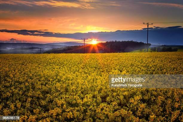 Sonnenuntergang Rapsfeld Heringen