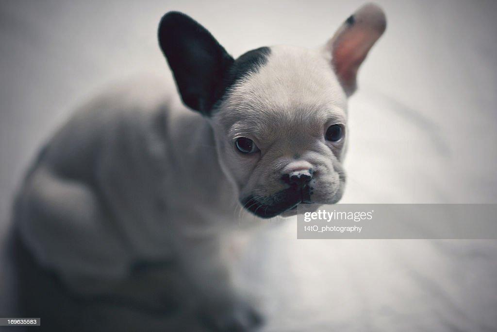 SonnyBlack - the little gangster : Stock Photo