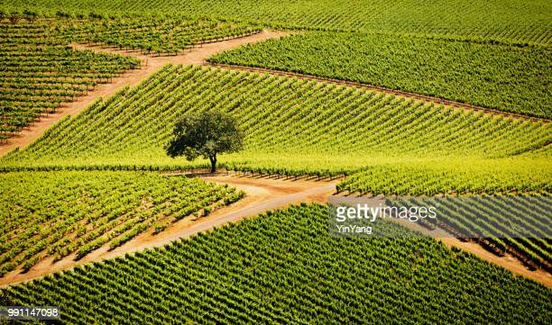 sonoma valley california vineyard and winery - sonoma county stock pictures, royalty-free photos & images