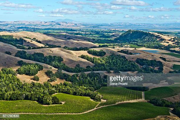 sonoma vineyards - sonoma county stock pictures, royalty-free photos & images