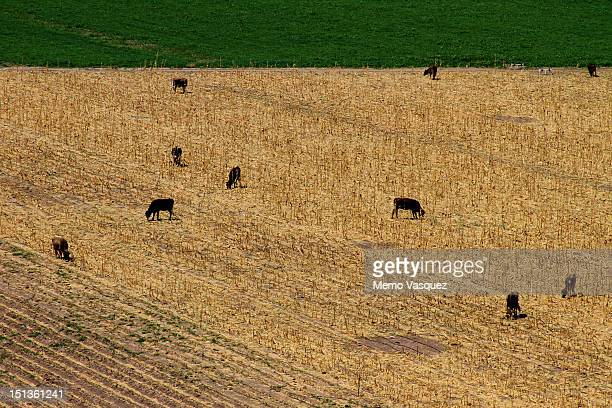 sonora fields - planchas_de_plata,_sonora stock pictures, royalty-free photos & images