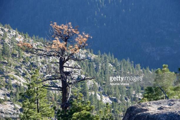 sonora pass, california - planchas_de_plata,_sonora stock pictures, royalty-free photos & images