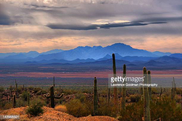 sonoran desert floor - sonoran desert stock pictures, royalty-free photos & images
