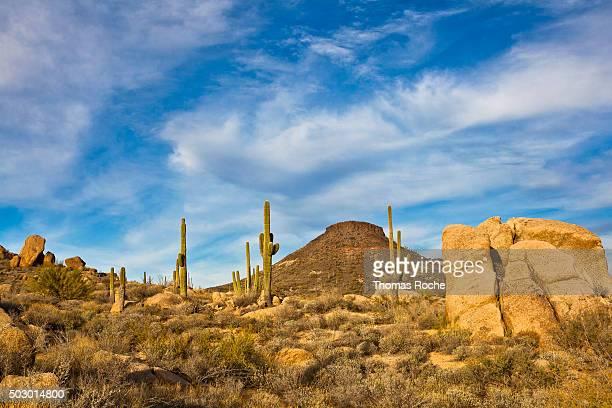 Sonoran desert landscape in Scottsdale