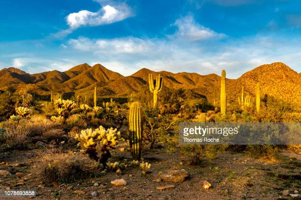 sonoran desert landscape - sonoran desert stock pictures, royalty-free photos & images