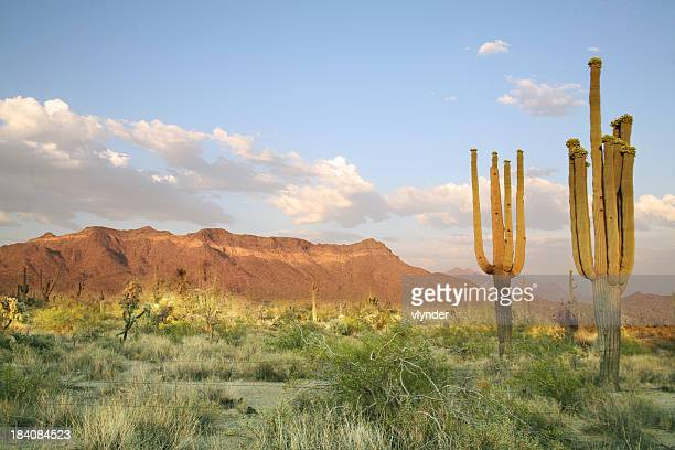 sonoran desert - sonora mexico stock photos and pictures
