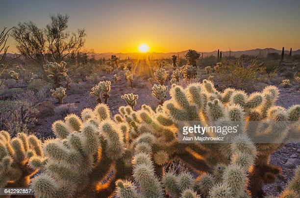 sonoran desert sunset - sonoran desert stock pictures, royalty-free photos & images