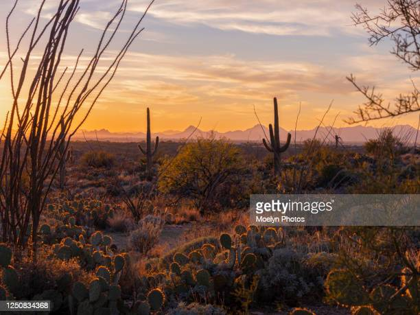 sonoran sunset in saguaro national park 001 - arizona stock pictures, royalty-free photos & images