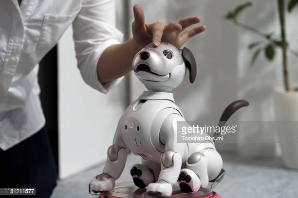 Sony Corp. Aibo robotic dog is demonstrated during the Ceatec Japan 2019 consumer electronics show on October 15, 2019 in Chiba, Japan. The Ceatec,...