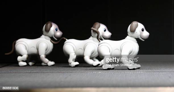 Sony Corp's new robot pet 'aibo' are seen during a press conference at the company headquarters on November 1 2017 in Tokyo Japan The aibo is...