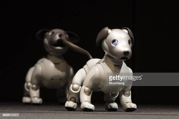 Sony Corp's new robotic dogs which the company is marketing as 'aibo' instead of the prior 'AIBO' walk on stage during a news conference in Tokyo...