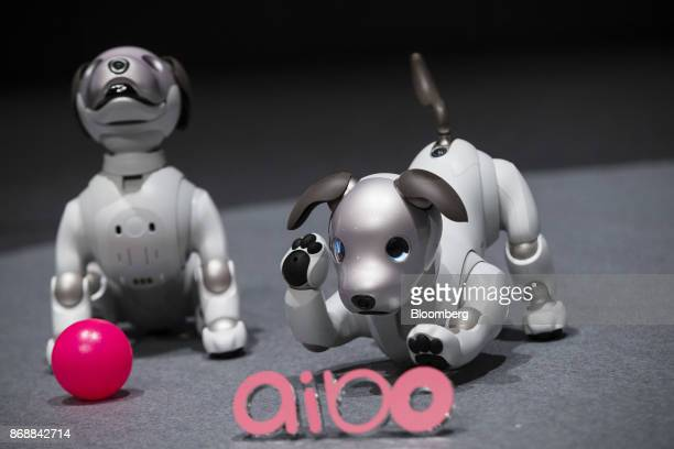 Sony Corp's new robotic dogs which the company is marketing as 'aibo' instead of the prior 'AIBO' are arranged for a photograph on stage during a...