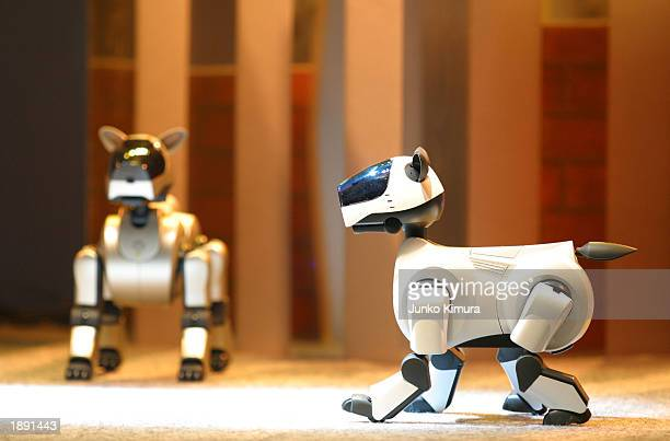 Sony's Aibo fourlegged walking robots developed with the aim of 'Coexistence of people and robot' performs on a stage at the Robodex2003 exhibition...