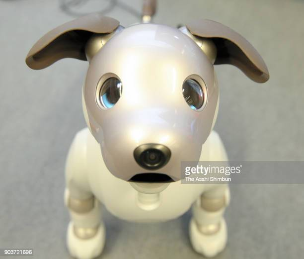 15 New Aibo Robot Dog Launched In Japan Pictures, Photos