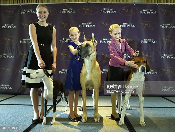 Sophia Rogers with Whippet 'Erik' Emma Rogers with Great Dane 'Joy' and Faith Rogers with American Foxhound 'Bobby' attend the 139th Annual...