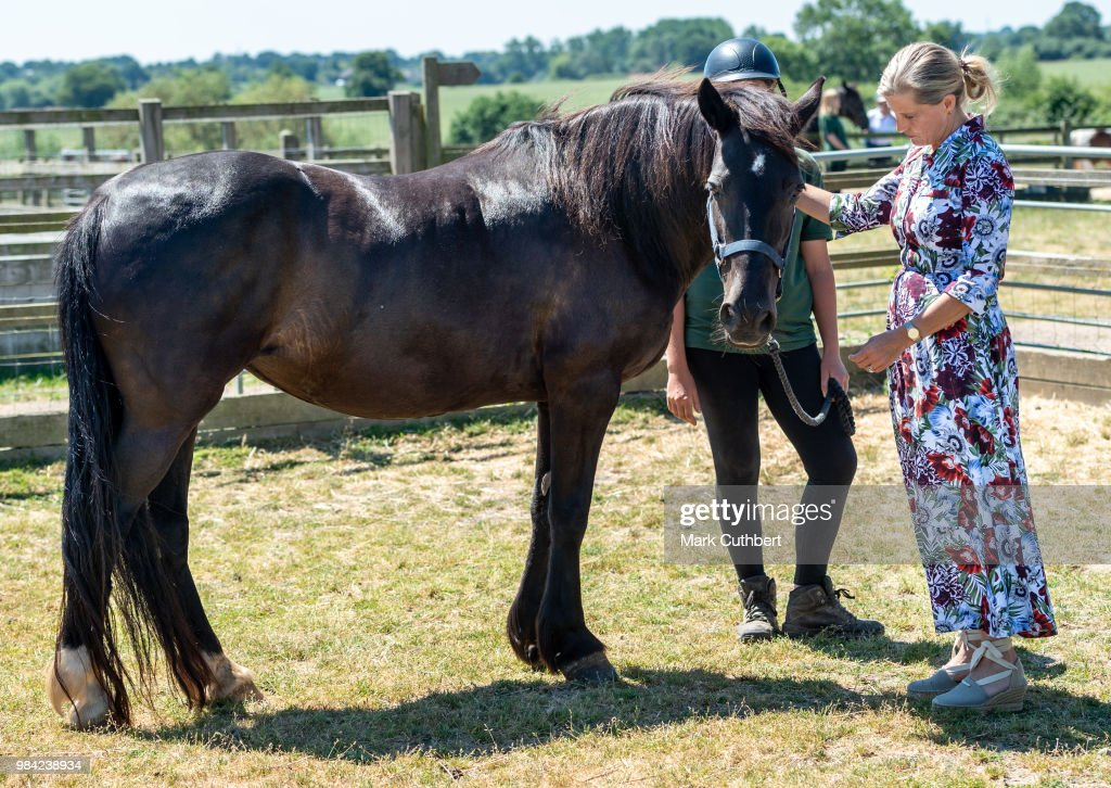 The Countess Of Wessex Visits The Remus Memorial Horse Sanctuary : News Photo