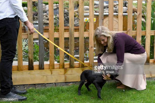 Sophie, Countess Of Wessex pets the dog of Jamie Sturt during her visit at 'The Half Moon' public house on July 08, 2020 in Windlesham, England. The...