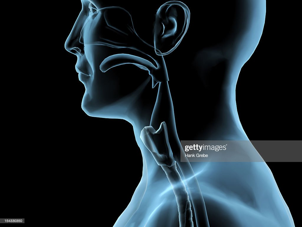 Lingual Tonsil Stock Photos And Pictures
