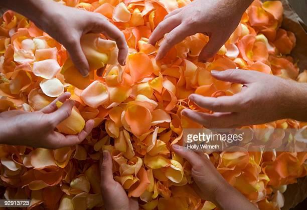 Sorting rose petals at a wedding