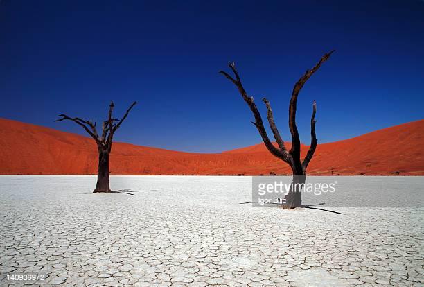 sossusvlei in namib desert, namibia - ナミブ砂漠 ストックフォトと画像