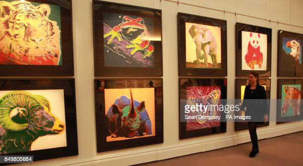 Sotheby's staff member Isabelle Brown walks past a set of Andy Warhol's 'Endangered Species' prints at the Sotheby's auction rooms in London
