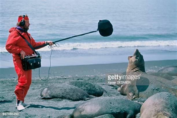 A sound engineer recording the sounds of a female elephant seal South Georgia St Andrew's Bay Un ingénieur du son enregistre un éléphant de mer...