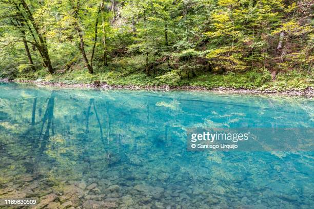 source of the kupa river in risnjak national park - flussufer stock-fotos und bilder