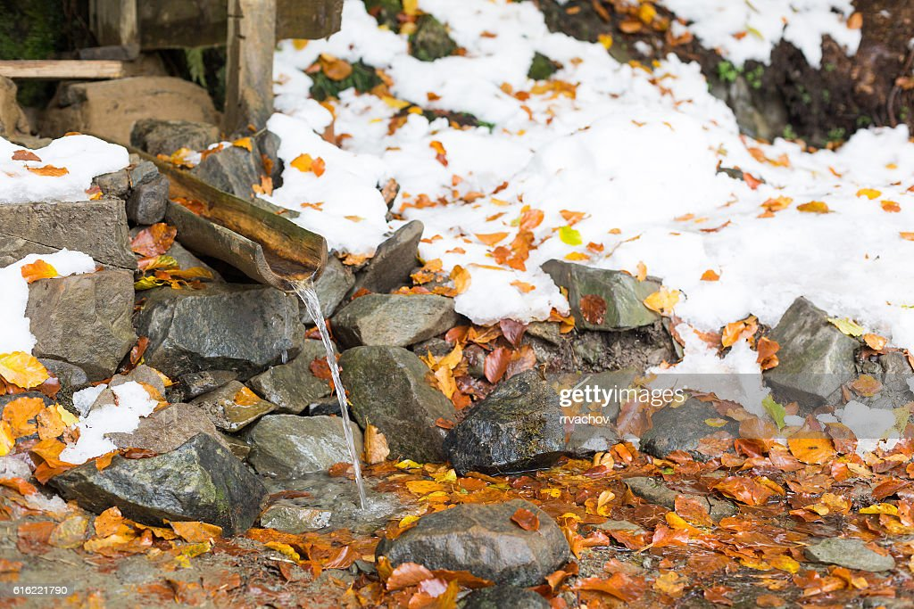Source of water in the woods. : Stock Photo